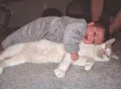 احتياجات القطط وكيفيه التعامل معها