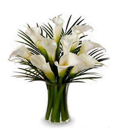 bloomex-calla-lilies