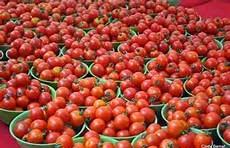 Producing Tomato