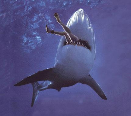 Cá mập ăn thịt người