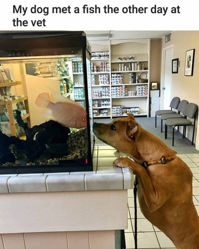 My dog met a fish the other day at the vet.