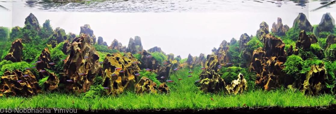 một bố cục hồ thủy sinh ấn tượng với đá Tiger