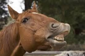 Вчені встановили, для чого давні монголи виривали конями зуби