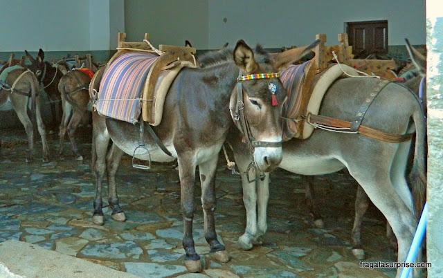 Burricos que fazem o transporte de turistas na Vila de Lindos, Ilha de Rodes, Grécia