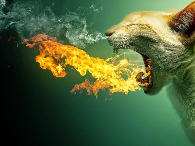 Chat en colère crache du feu, de la fumée lui sort des naseaux