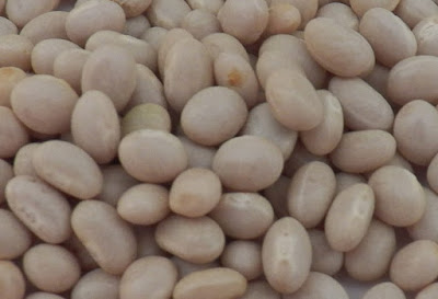 contents of the white kidney bean extract