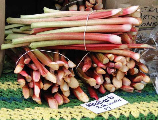Bundles Of Rhubarb