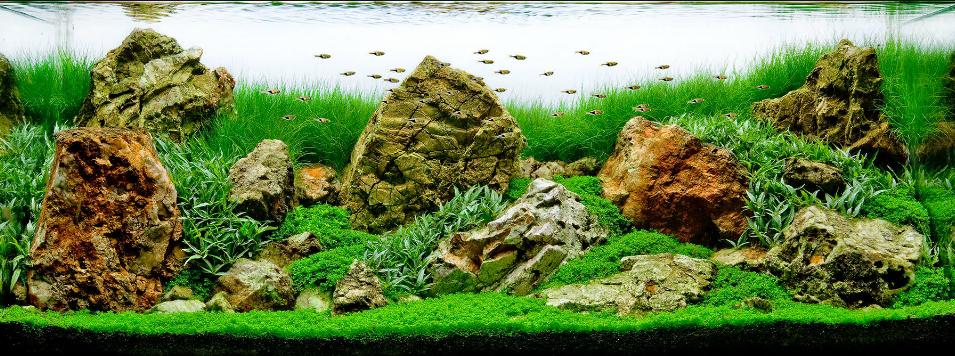 Một bố cục thủy sinh sắp đá đơn giản, dễ làm