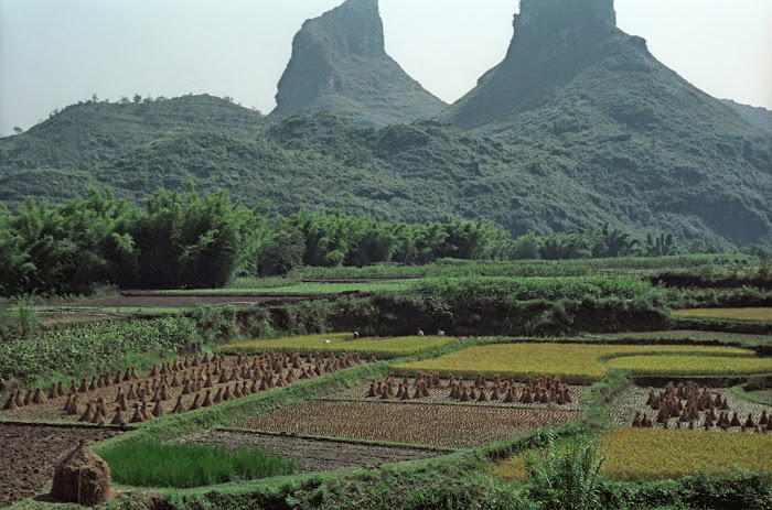 Yangshuo, rizières, © L. Gigout, 1990