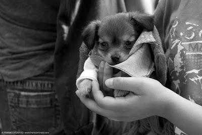 cachorro en bendicion para mascotas