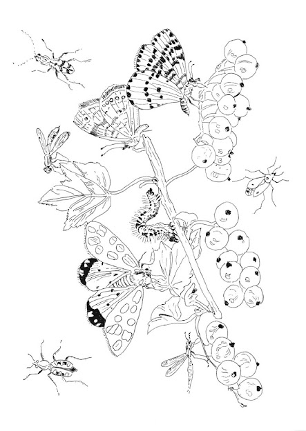 Free Printable Cartoon Picture Colo  Pipparossilostgardenadultcoloring Bookinsect