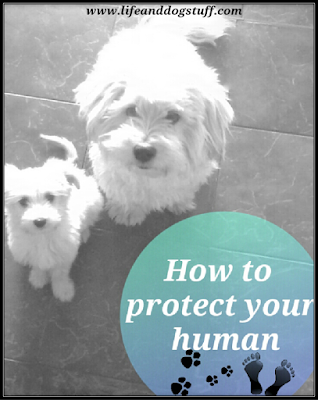 How To Protect Your Human