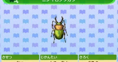 とび森 カブトムシ