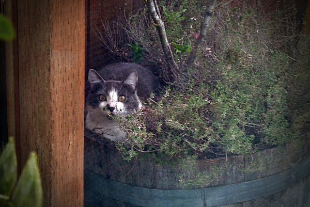 A cat mocks me from the other side of the window...