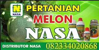 AGEN NASA DI Gunung Maligas Simalungun - TELF 082334020868