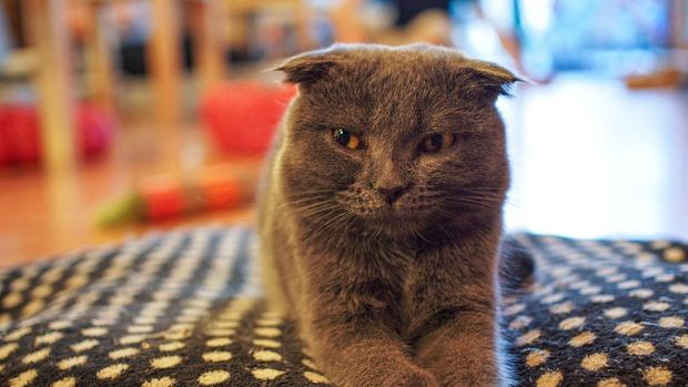 Tren Kafe Hewan: Pelecehan Terhadap Binatang?