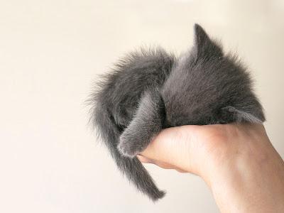 anak kucing tidur