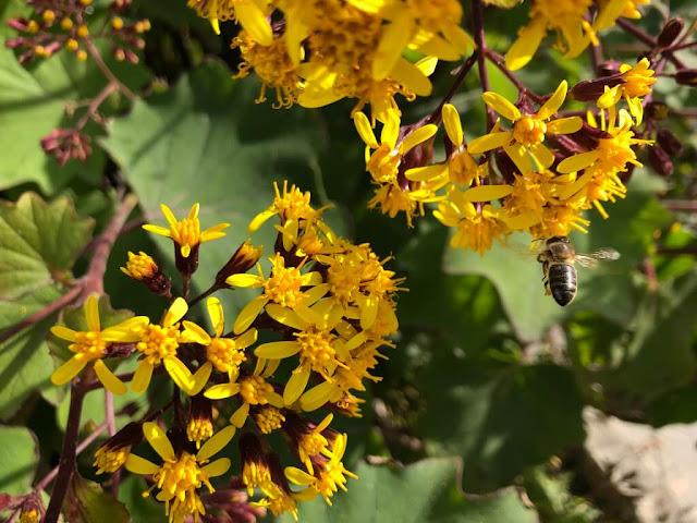 Flores e abelhas