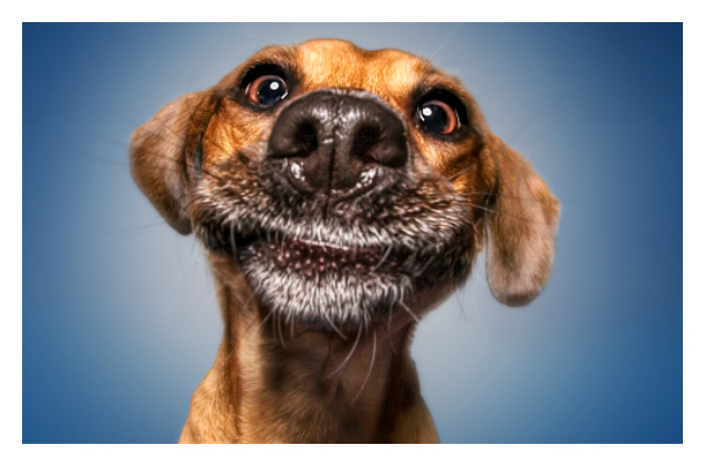 Stunning Photos Captures Dogs' Pre-Catch Treat Face