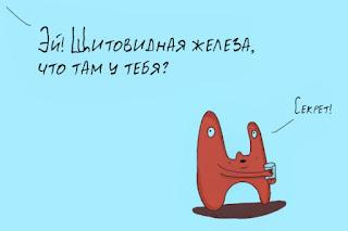 щитовидная железа и секрет