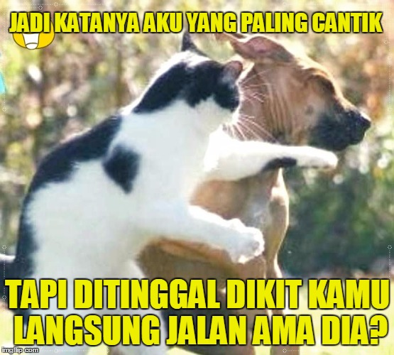 13 Meme Kucing Ini Lucu Banget Bikin Gemes Campur Ngakak Lucu Me