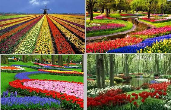 bunga, taman bunga, karangan bunga
