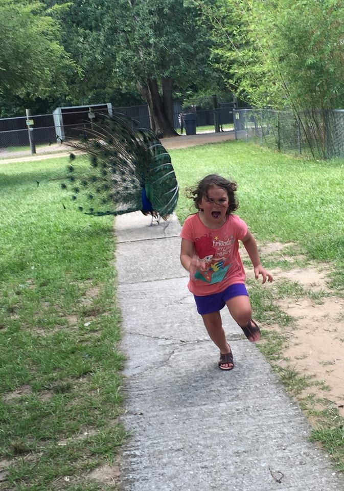 Photo of a Little Girl Running Away From a Peacock Goes Viral