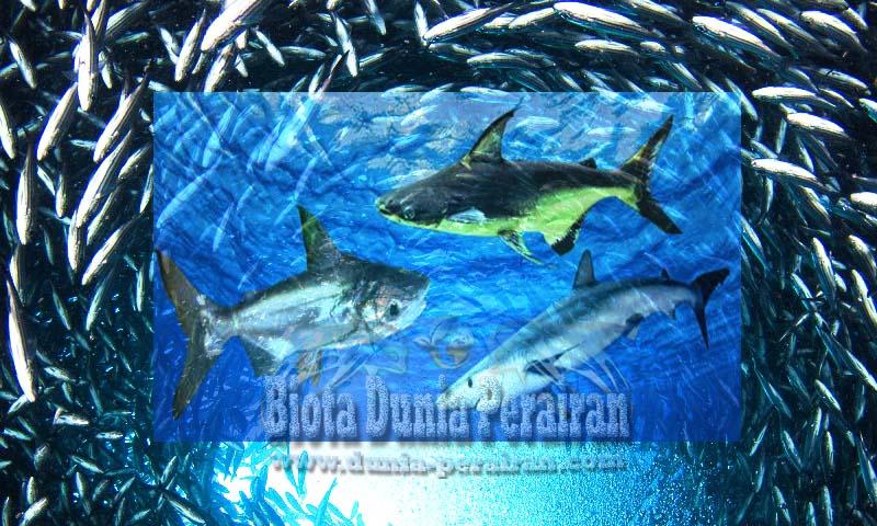 48 Gambar Hewan Kelas Pisces HD Terbaik