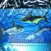 Definisi atau Pengertian lengkap Serta Klasifikasi dan Ciri ciri Umum Pisces (ikan)