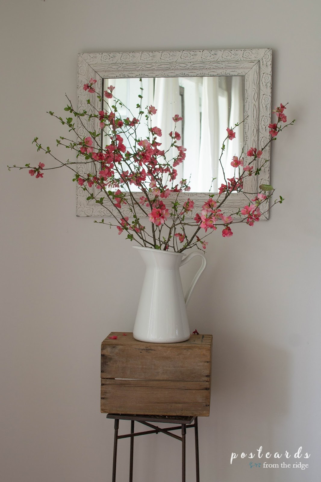 coral quince branches in a white pitcher