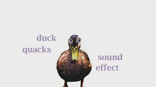 learn duck sounds