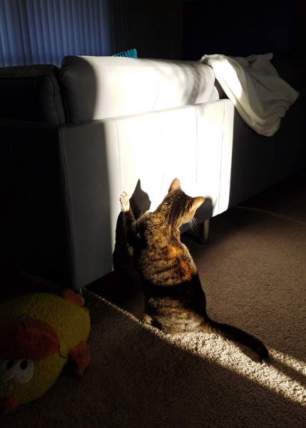 image of Sophie the Torbie Cat crouching behind the sofa, with her front paws up on its back, looking to one side as if on the lookout for an incoming play-attack from one of her sisters