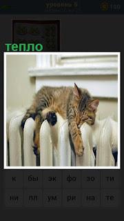 Кошка лежит на батарее, которой тепло и уютно свесив лапы
