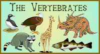 Jenis dan Ciri-ciri Hewan Vertebrata