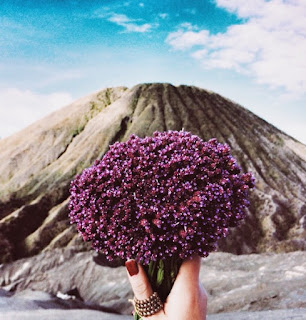 Gambar Bunga Edelweiss 2