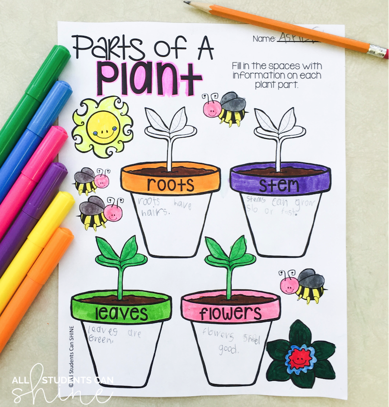 plants graphic organiser