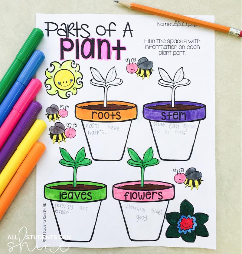 plants graphic organiser