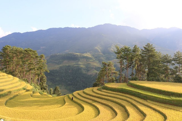 How to choose the Best Trekking Mu Cang Chai tour? 2
