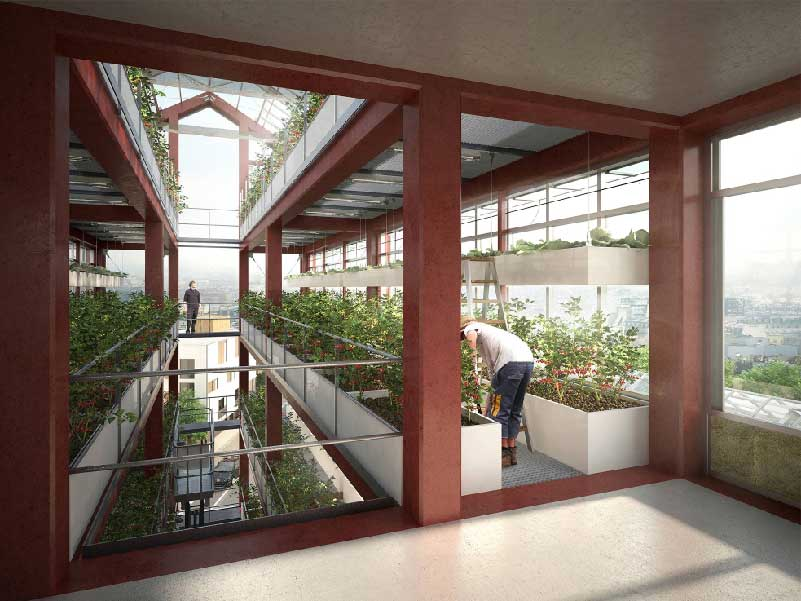 agricoltura urbana