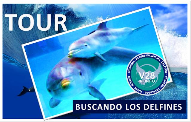 imagen Tour buscando los delfines Mochima carnaval 2017