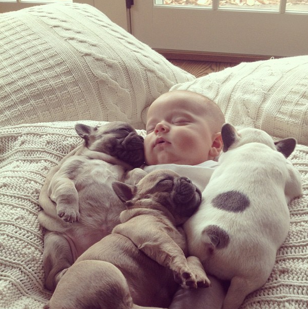 Pics of Babies and Puppies