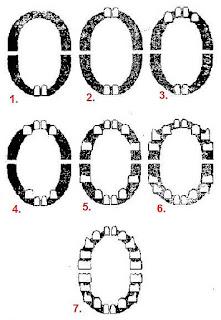 Порядок прорезывания зубов, схема