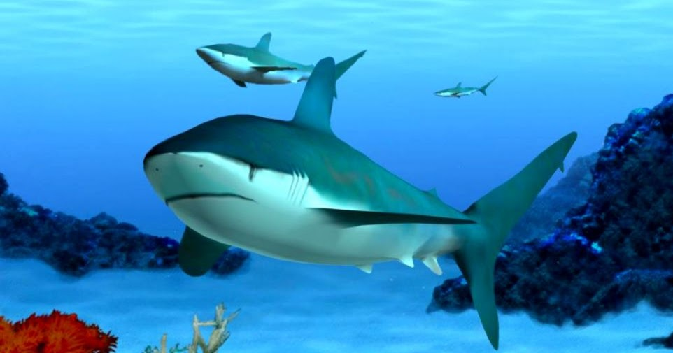 3d Moving Wallpaper For Windows 8 Aquarium Screensavers 3d Wallpaper Best Hd Wallpapers