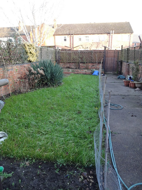 Scurry Garden during Renovation