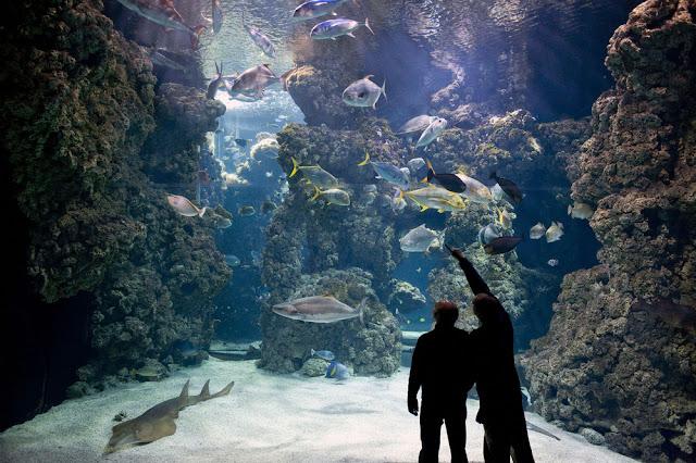 Conhecer o Museu Oceanográfico de Mônaco