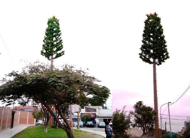 Empresas estarán obligadas a mimetizar antenas que se instalen en áreas verdes