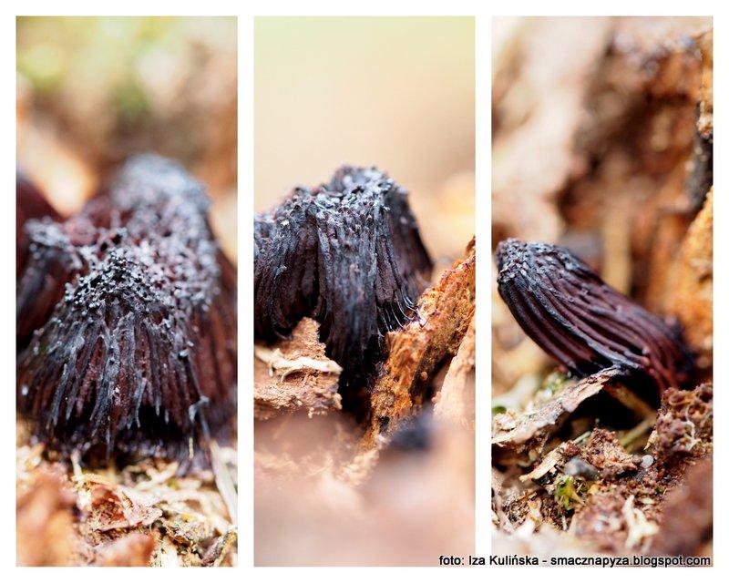 sluzowiec, sluzowce, to nie grzyb, las, w lesie, flora,