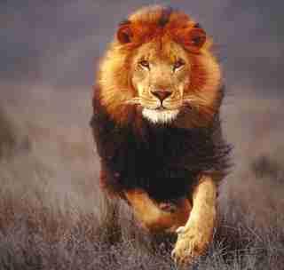 एक शिक्षाप्रद कहानी - शेर और गीदड़ की शर्त | Motivational Story In Hindi | Gyansagar ( ज्ञानसागर )