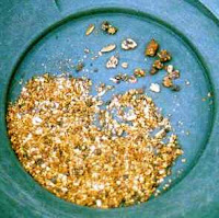 Gold dust in a pan taken from a river