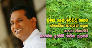 Health Minister to prepare 'kansa' cultivation as a herbal beverage ...   and not to be smoked